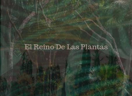 """Fabrizio Lucci - New single alert - """"El Reino De Las Plantas"""". Get your bass fix...."""