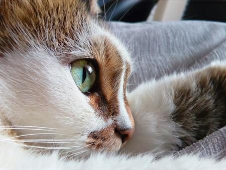 Zawiadomienie o znalezieniu kota
