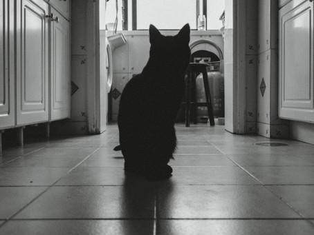 A Casa, a Família e o Gato (Episódio 2)
