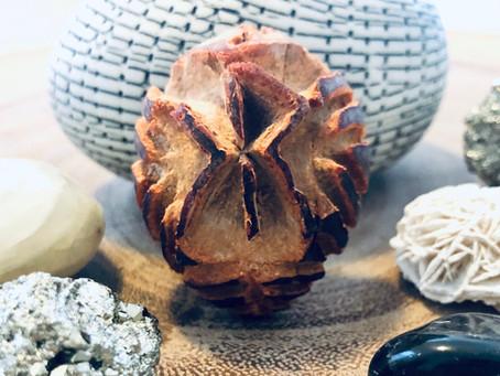 Avocado Seed Sigils