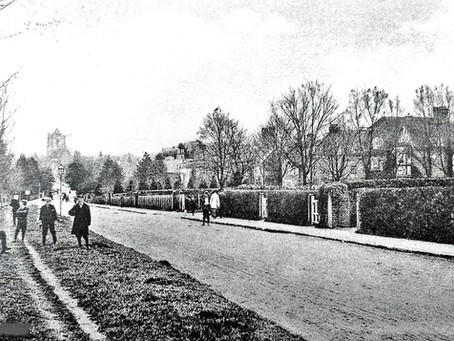 1930: The Ancient Yews of Haywards Heath