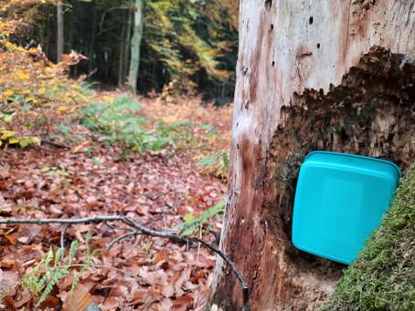 Kibaz im Wald!