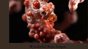 Wonderful Raja Ampat