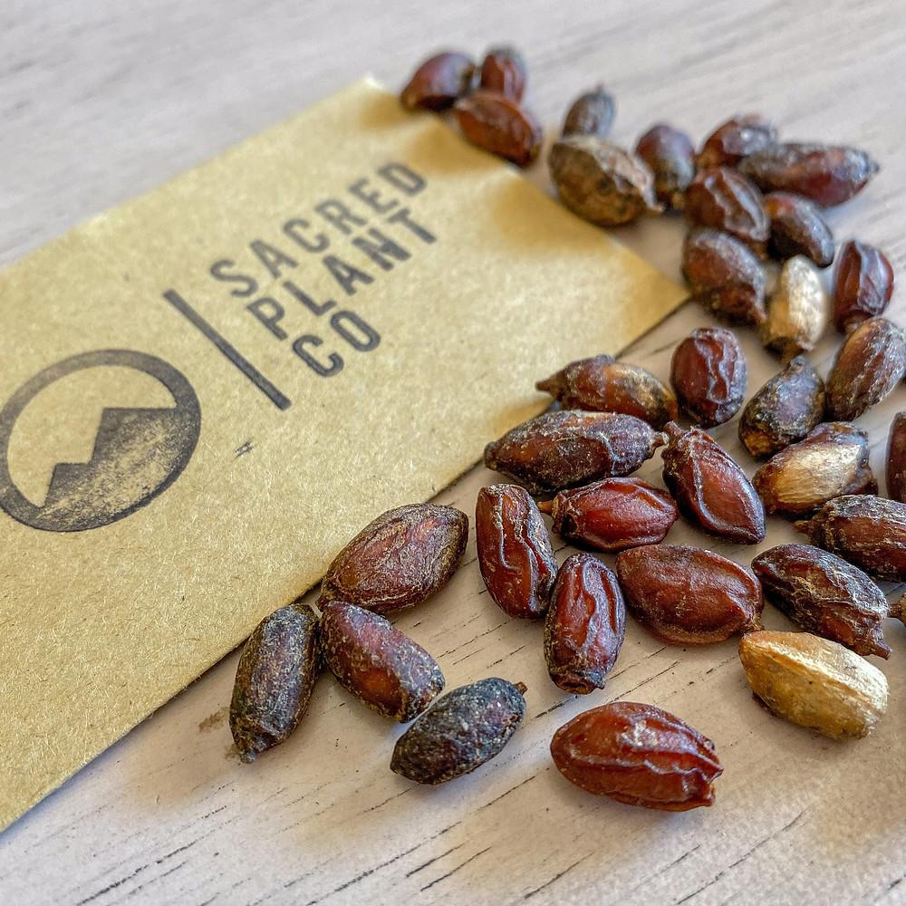 Sacred Plant Co Neem Seeds
