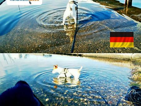 春のお散歩は、愛犬に優しいドイツのリードで♪
