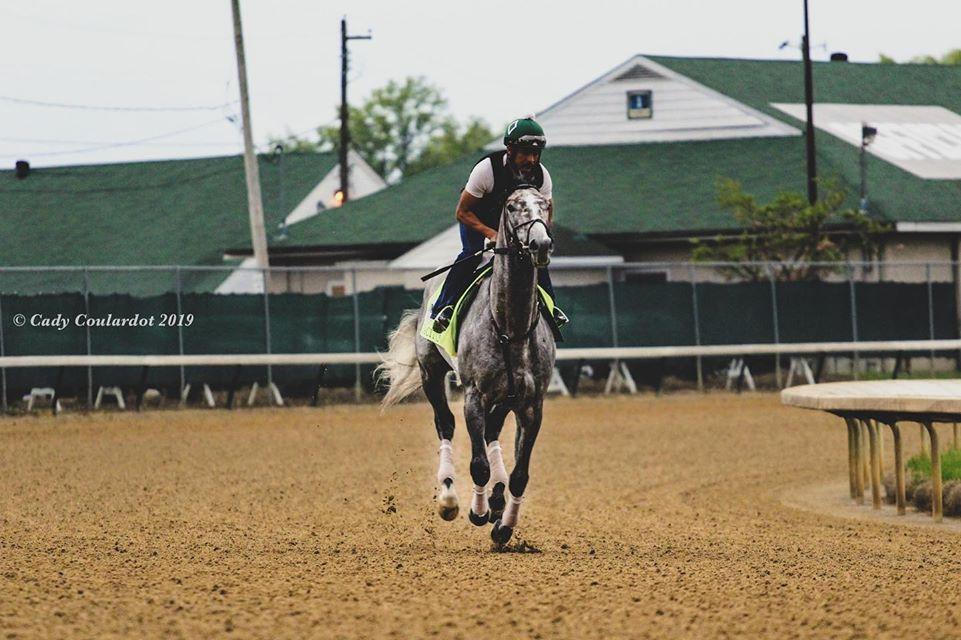 Tacitus racehorse prepares for $20 million Saudi Cup