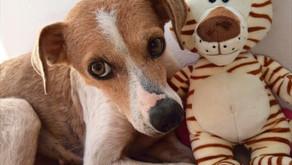 Mundo animal: A importância da castração