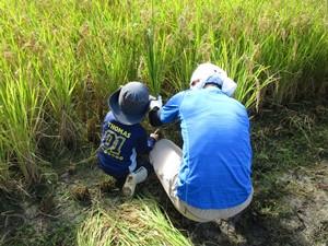 親子わくわく 自然学習~稲刈り
