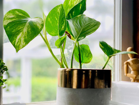 Improve Your Health With These Air-Filtering Plants: