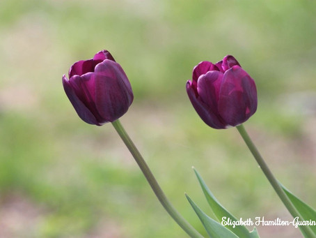 Life with the Zoom Lens On - Let's Focus on the Blooms