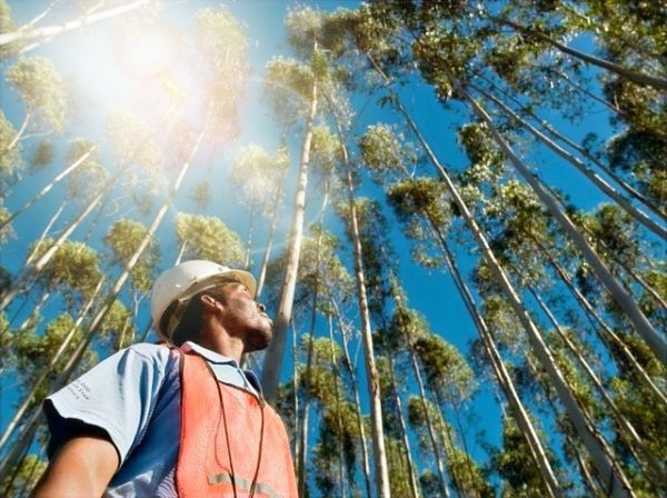 Depicted in this image is a Forestry or Logging worker looking up to the trees he is about to cut and process typically done in companies such as SAPPI South Africa