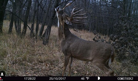 USING TRAIL CAMERAS ON SCRAPES TO FIND PUBLIC LAND BUCKS