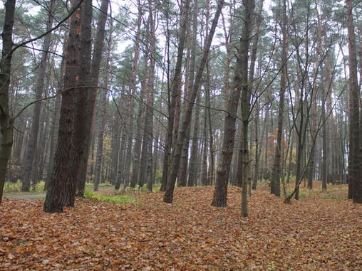 Nemuno kilpose - nežinomi senovės lietuvių pilkapiai