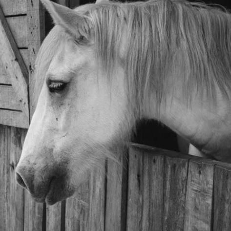 Cherry Valley Horse Rescue