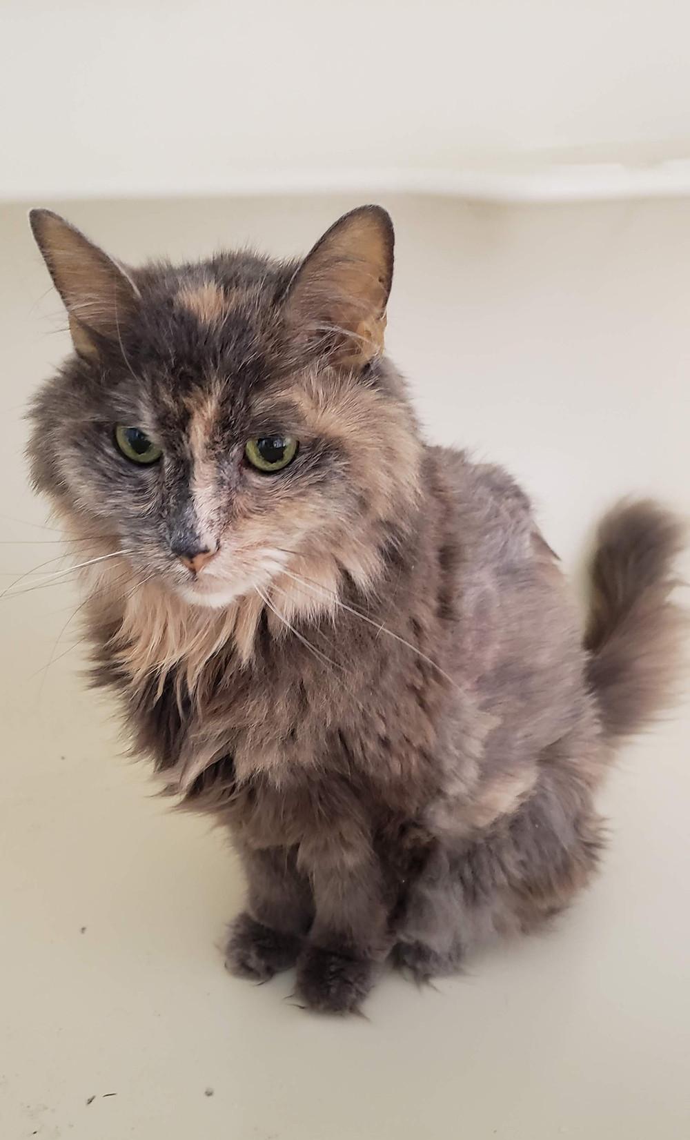 senior cat, health, mental health, grief, loss, wellness