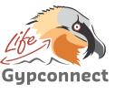 La plume du Life Gypaète