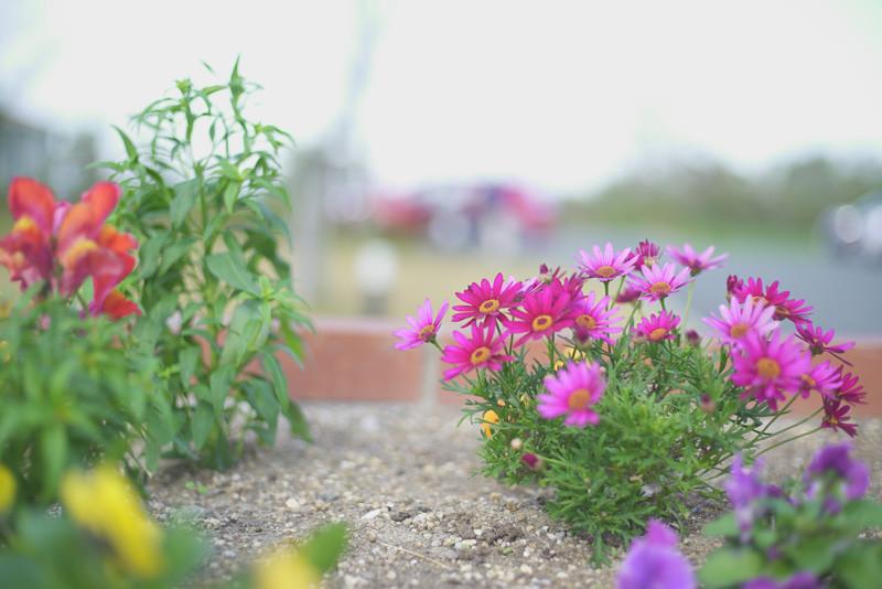 フラワーサーチ前の花壇
