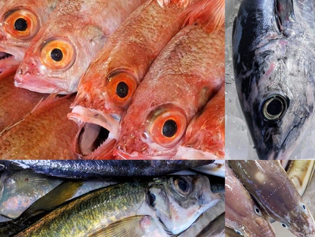 「白金台でお魚祭り」好評につき9月26日(土)にも開催決定!