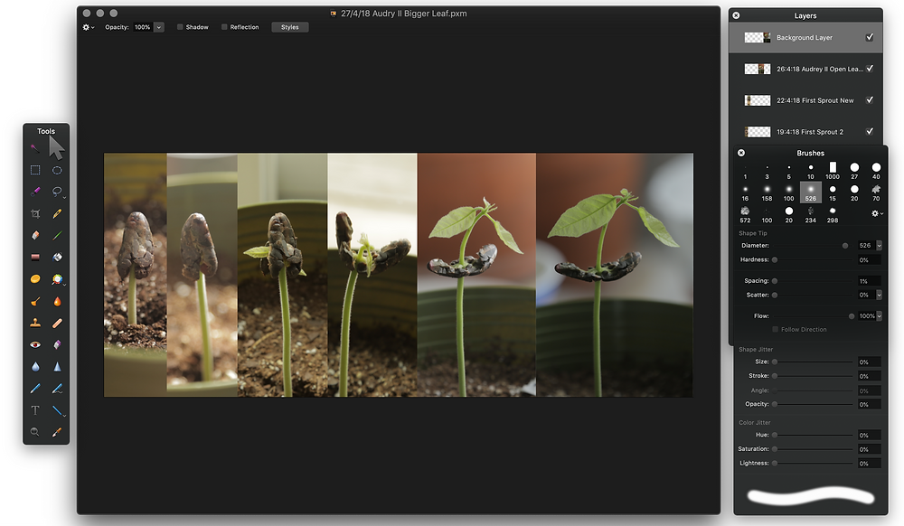 A screenshot of the pixelmator dashboard featuring a series of images that have been strung together that show the timeline of a cacao tree sprouting.