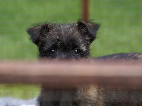 Pup op de foto.