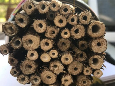 World Bee Day 2020: How to Build a Native Bee Hotel