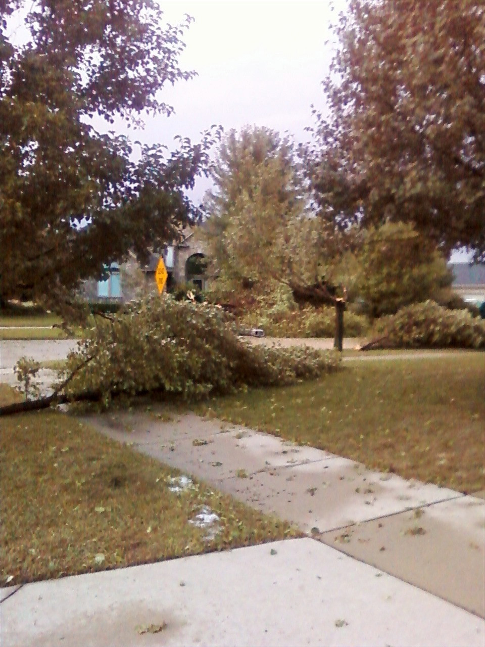 Trees downed from an EF-1 tornado directly across the street from our house in Shelby Charter Township, MI (August 2010)