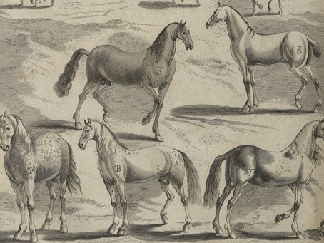 A Brisk Trot Through the Story of Horses and Books