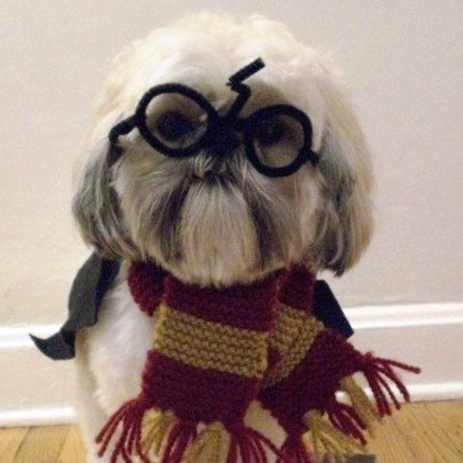 A dog dressed as Harry Potter with a scarf and glasses