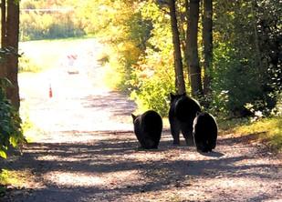 It's time for 'da bears!