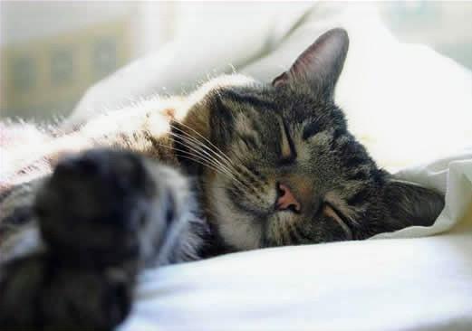 3 passos SIMPLES para fazer feliz o seu gato, inclui catnip (erva-gateira)