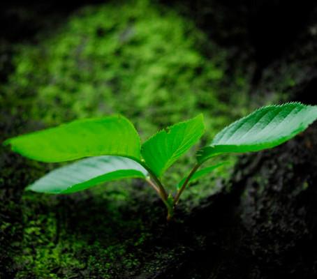 雨上がりの緑