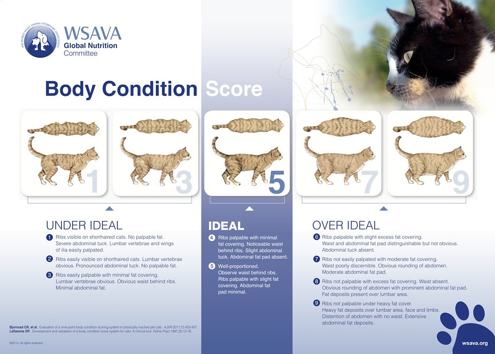 Images courtesy World Small Animal Veterinary Association (WSAVA)