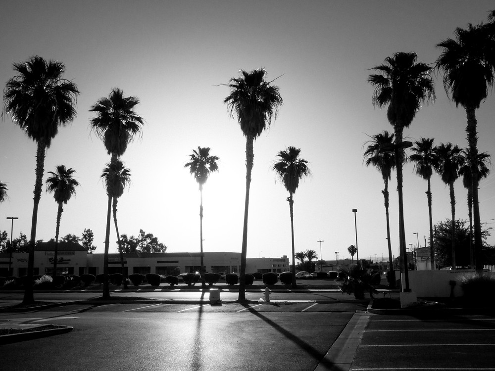 Palm Trees at sunrise outside Sunrise Coffee House in Henderson, NV