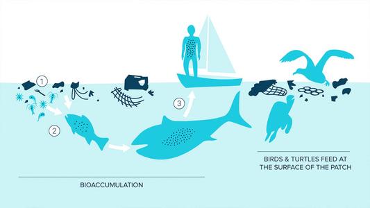 plastic food chain