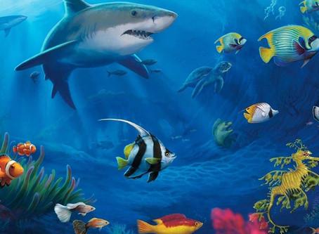 바다이야기 | 야마토게임 |릴게임 | 다운로드