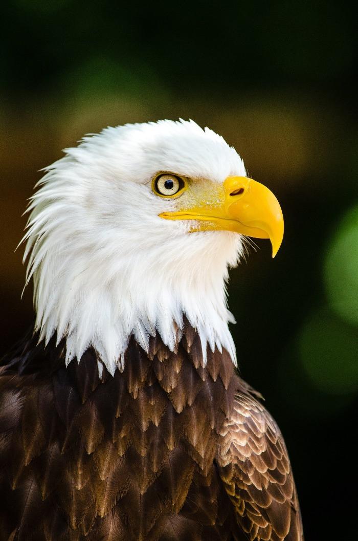 Biomimétisme espèce d'aigle