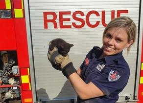 CUTENESS ALERT: Kitten rescued in Tamworth