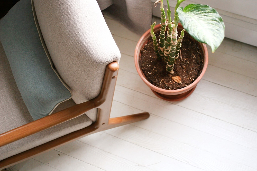 Terra cotta plant with midcentury wood arm chair