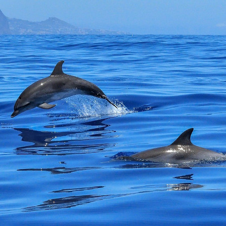 Fun Facts About Ocean Animals!