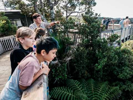 Student kaitiaki wanted to work in the best work environment in Tāmaki Makaurau
