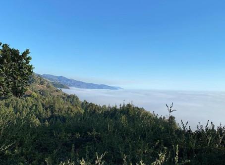 Big Sur Fog Bank