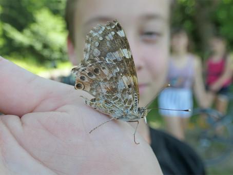 Treffpunkt Schmetterling