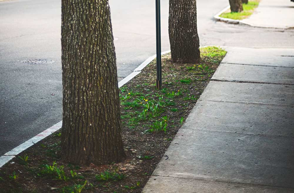 #trädistadsmiljö #stadsträd #biokol