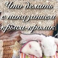 Что делать с наказанием крыса-кролик?