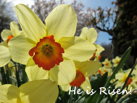 The Lord is risen! He is risen indeed! Alleluia!