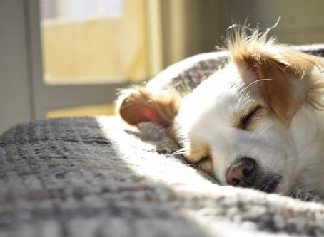 Top 5 Ways To Get Better Sleep