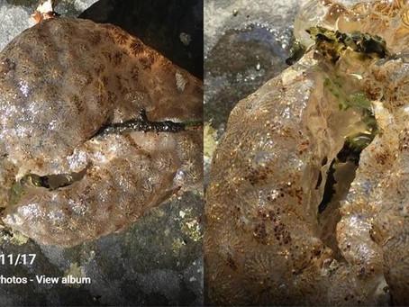 Freshwater Bryozoans