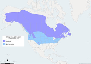 White-winged Crossbill Range Map
