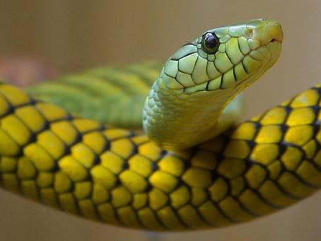 Snake wisdom