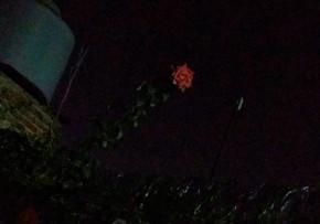 La flor más alta.